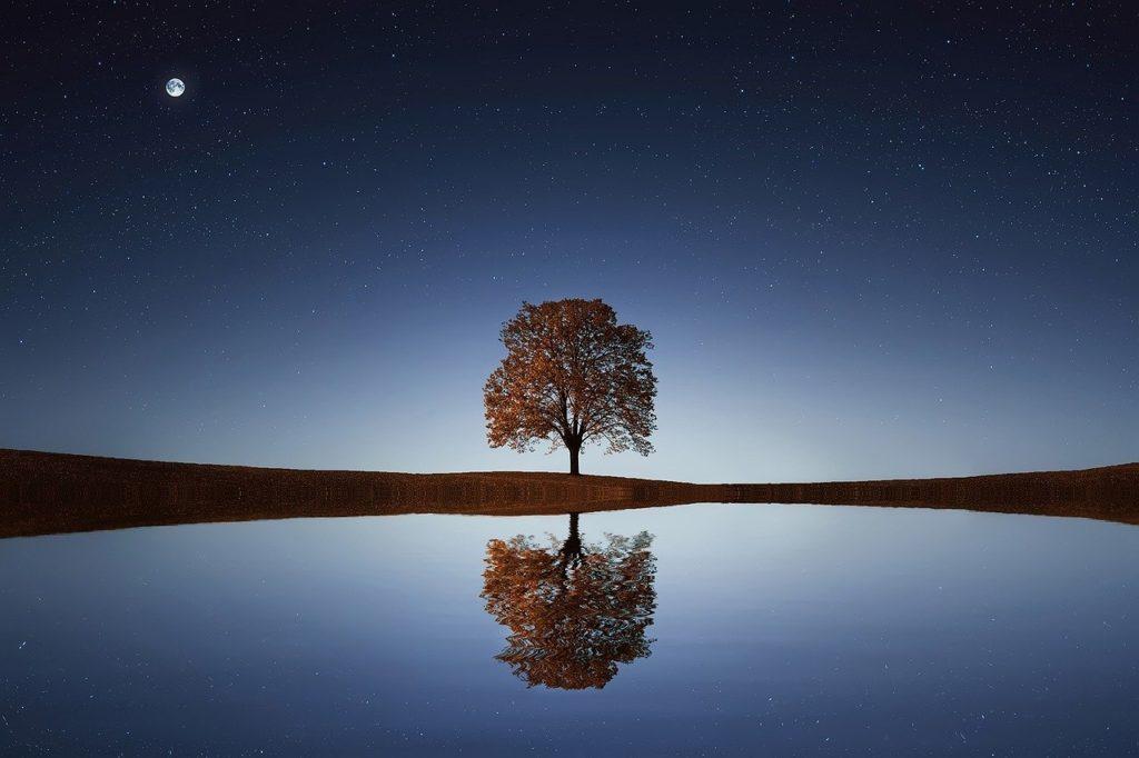 Cette image illustre parfaitement le reflet de l'arbre. Elle nous aide à visualiser les propos tenus du texte. Chaque compréhension symétrique par rapport à la terre est une initiation.